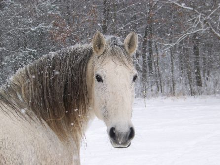 horse on icy day